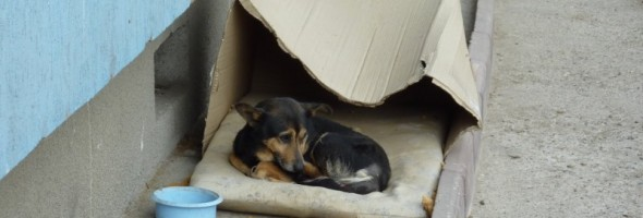 dog-living-in-cardboard-experience-590x200[1]