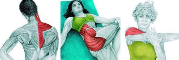 musculos-intro