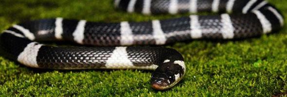 destacada--serpiente
