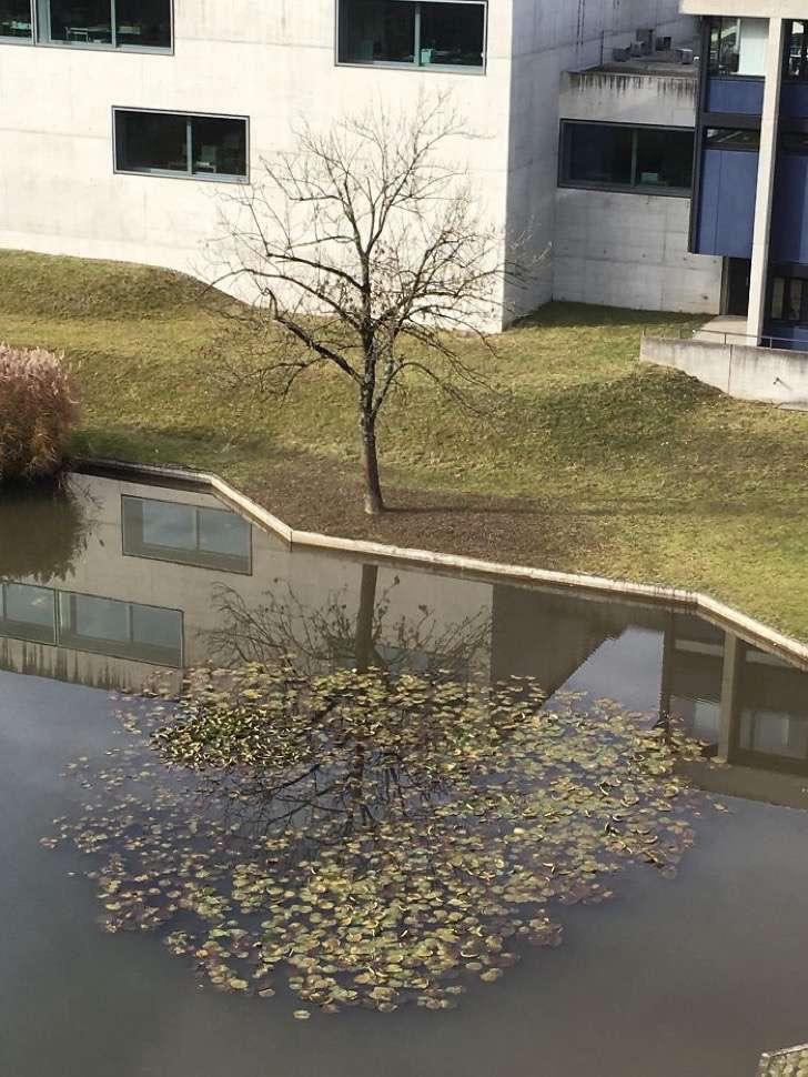 Árbol en perfecta reflexión